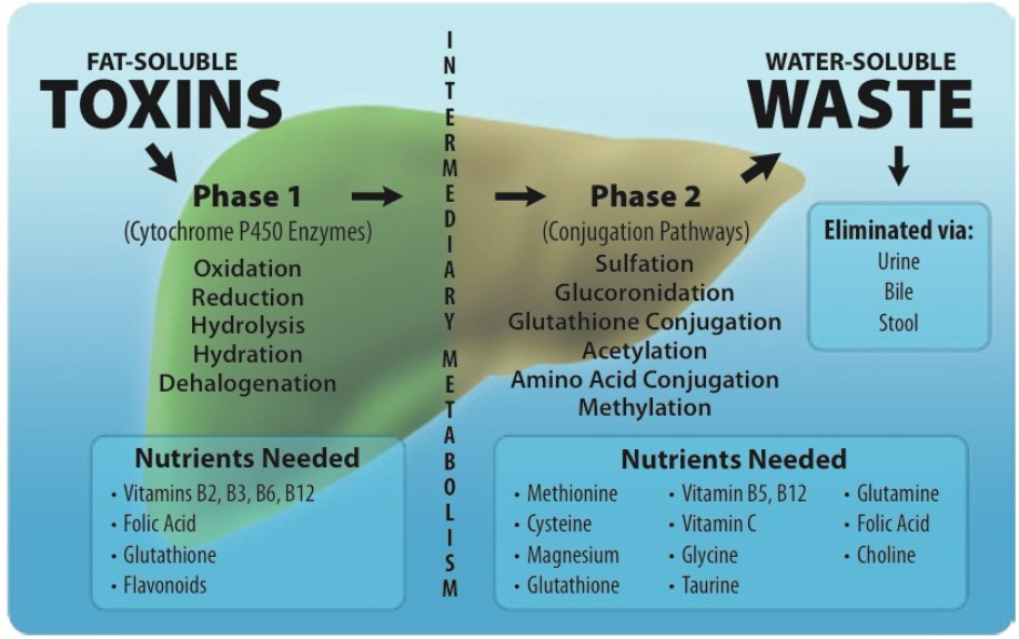 Fat Soluble vs. Water Soluble Toxins